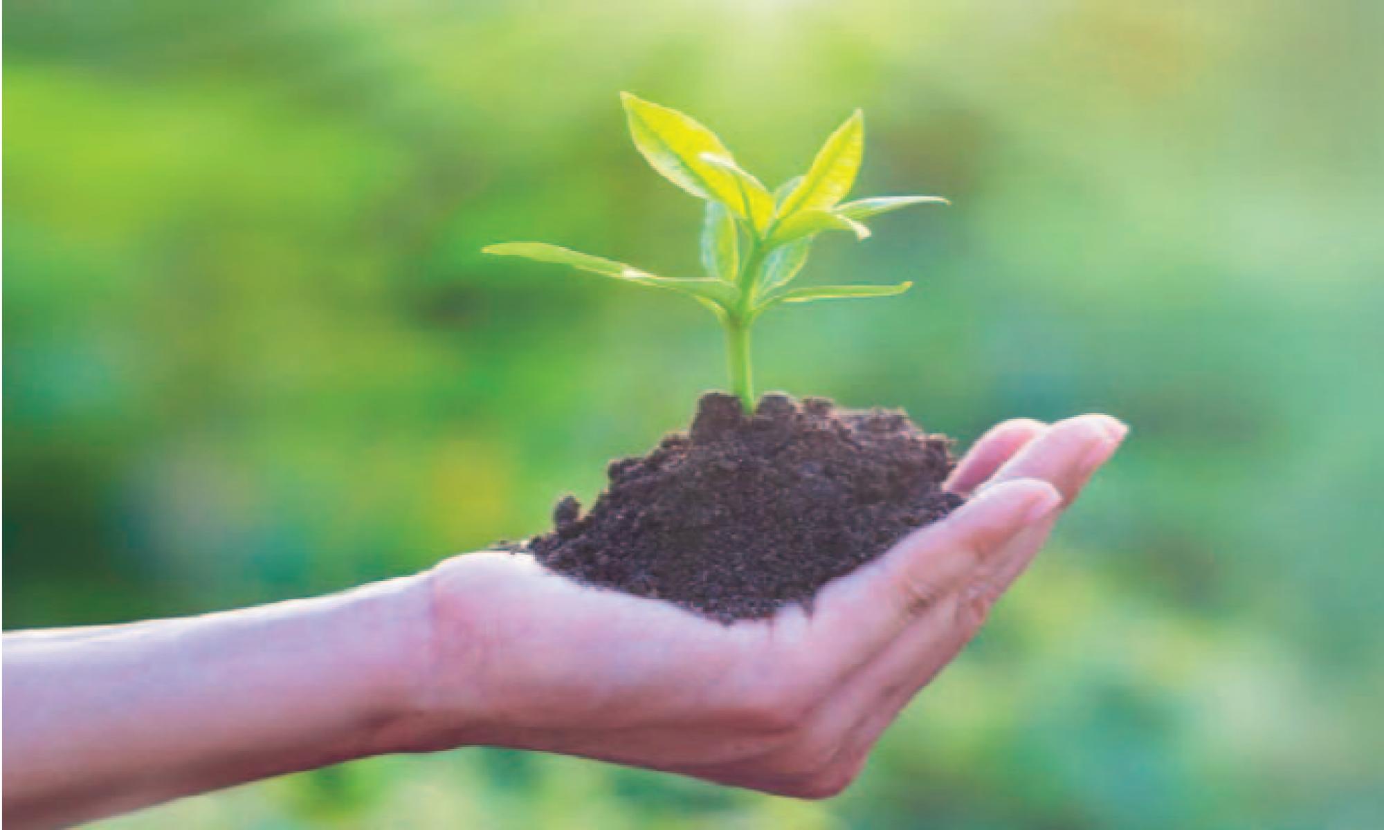 SUNAVIS - Digitizing Sustainable Value Chains